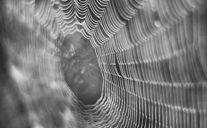 人工のクモの糸をつくる会社スパイバーについて