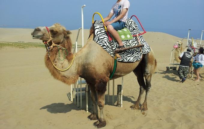 yu砂丘でラクダに乗る