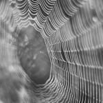 新素材!人工でクモの糸を作るベンチャー会社「スパイバー」がすごい。クモの糸の製造方法や利用方法について。