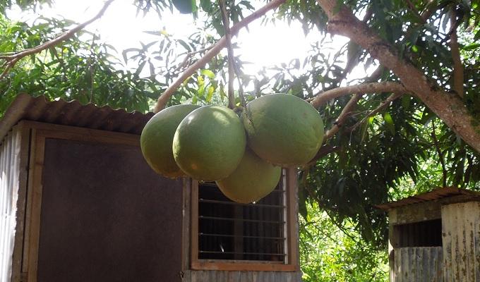yuサイパングレープフルーツ