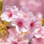 春闘を分かりやすく説明。意味や時期、歴史について。「ベア」や「ボーナス」にはどんな効果があるのか?