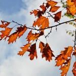 秋なのに内定ない新卒の就活生は起死回生を試みろ!